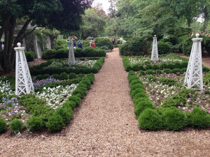 A parterre garden Janet designed years ago now flourishing.